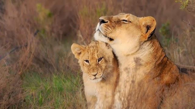Kariega Game Reserve the Homestead