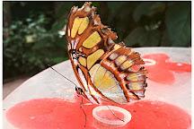 La Serre aux Papillons, La Queue-les-Yvelines, France
