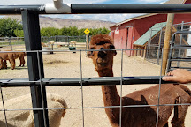 Suncrest Orchard Alpacas, Palisade, United States