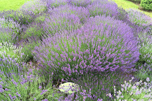 Lavender Hill Farm, Boyne City, United States