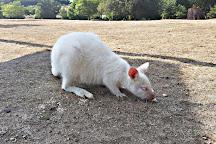 Le Jardin des Kangourous, La Possonniere, France