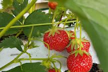 Belhaven Fruit Farm, Dunbar, United Kingdom