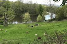Woodstock Farm Sanctuary, High Falls, United States