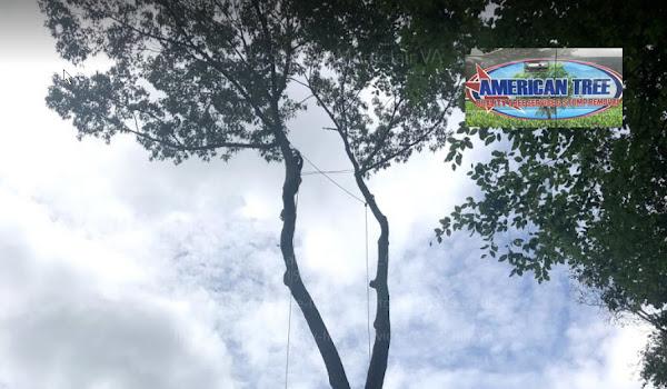 Tree Service Montclair VA by American Tree & Landscaping LLC