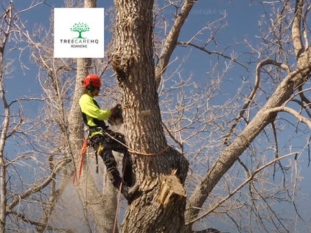 Tree service work being completed by an arborist with TreeCareHQ Roanoke VA
