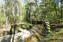 Hemlock Bluffs Nature Preserve, Cary, United States
