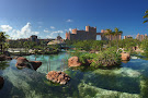 Predator Lagoon