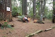 Parque das Sequoias, Canela, Brazil