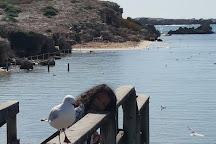 Penguin Island, Rockingham, Australia