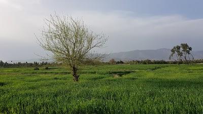 Qarghayi