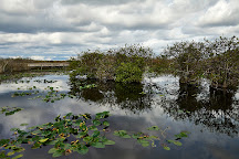 Gumbo Limbo Trail, Everglades National Park, United States