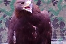 York Bird of Prey Centre, Huby, United Kingdom