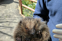 Tiggywinkles Wildlife Hospital Visitor's Centre, Haddenham, United Kingdom