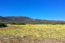 Goegap Nature Reserve, Springbok, South Africa