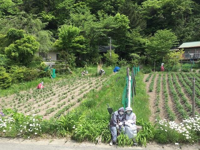 Nagoro (Scarecrows Village)