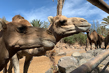 Oasis Park Fuerteventura, La Lajita, Spain