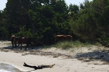 Shackleford Banks, Harkers Island, United States