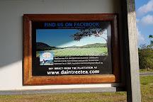 Daintree Tea, Daintree, Australia