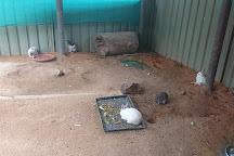 Australia Walkabout Wildlife Park, Calga, Australia