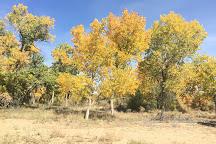 Paseo del Bosque Trail, Albuquerque, United States