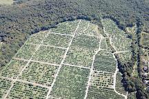 Masker Orchards, Warwick, United States