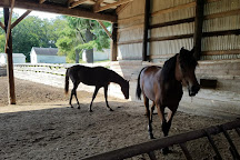UVM Morgan Horse Farm, Middlebury, United States