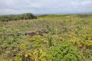 East Henna Cape