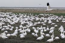 Merced National Wildlife Refuge, Merced, United States