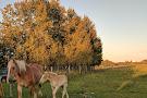 Finnegan Farms