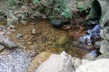 Newlands Forest, Newlands, South Africa