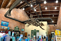 Georgia Sea Turtle Center, Jekyll Island, United States