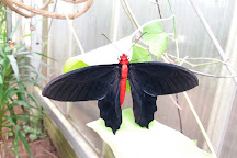 The North Somerset Butterfly House, Congresbury, United Kingdom