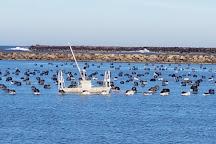 Umpqua Aquaculture Triangle Oyster Farm, Winchester Bay, United States