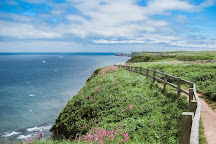 RSPB Bempton Cliffs, Bempton, United Kingdom