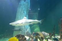 National Sea Life Centre, Bray, Ireland