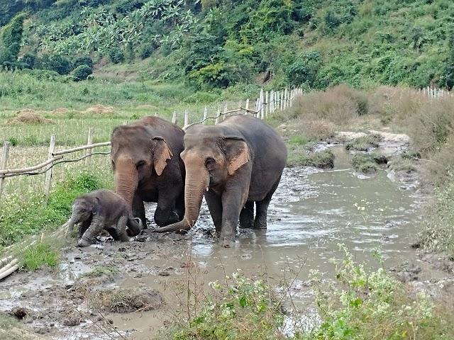 Elephant Nature Park - Elephant Freedom