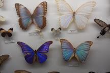 La Cite des Insectes, Nedde, France