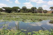 Nguuni Nature Sanctuary, Mombasa, Kenya