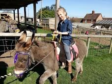 Scotty's Donkeys & Animal Park