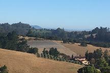 Monte-Bellaria Di California, Sebastopol, United States
