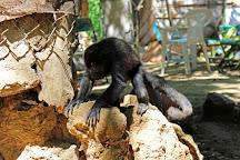 The Monkey Farm, Playa Ocotal, Costa Rica