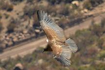 Mirador de Los Condores, San Jose de Maipo, Chile