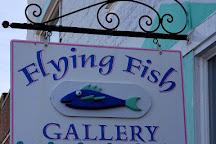Flying Fish, Chincoteague Island, United States