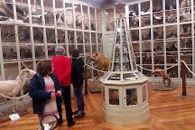 Museo civico di storia naturale Craveri, Bra, Italy