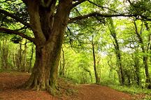 Anston Stones Wood, South Yorkshire, United Kingdom