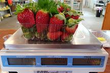 Strawberry Fields, Palmview, Australia