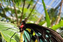 Australian Butterfly Sanctuary, Kuranda, Australia