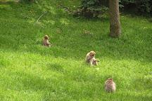 La montagne des singes, Kintzheim, France