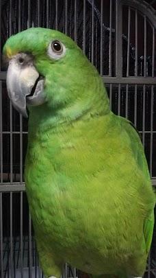 American Bird Company washington-dc USA