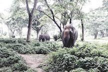 Elephant Valley Thailand, Chiang Rai, Thailand
